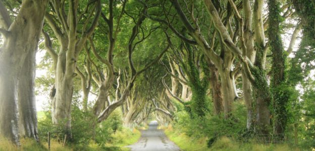 The Dark Hedges – County Antrim