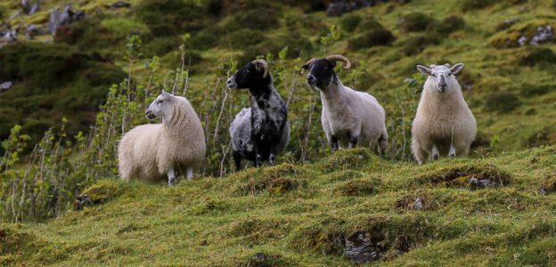 The Hag's Journey – West Ireland – 2019