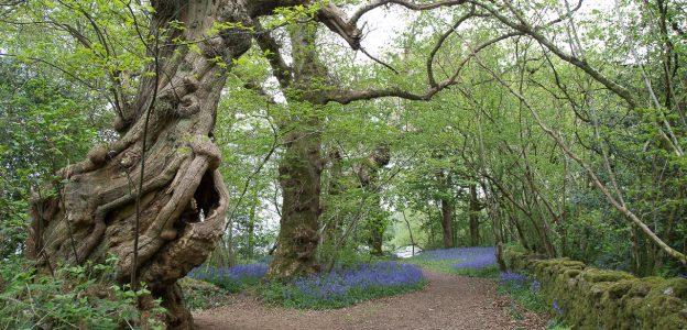 Inchmahome Forest Walk – Stirlingshire, Scotland